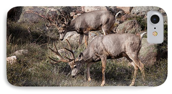 Mule Deer Bucks IPhone Case by Ronald Lutz