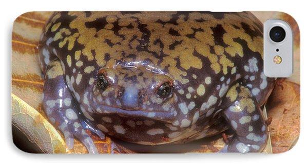 Mullers Termite Frog Phone Case by Dante Fenolio