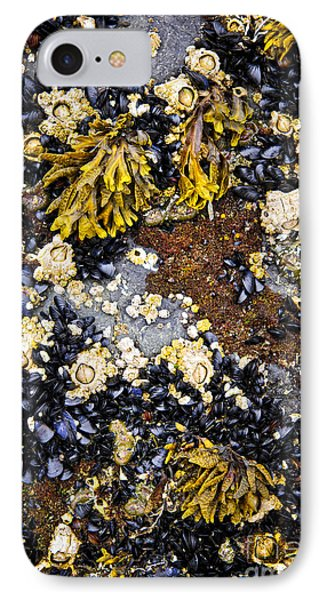 Mussels And Barnacles At Low Tide Phone Case by Elena Elisseeva