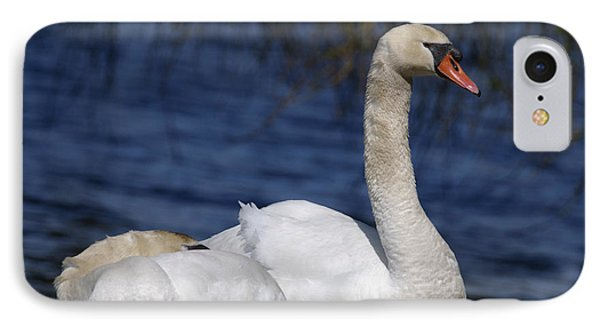 Mute Swans By Lagoon Phone Case by Sharon Talson