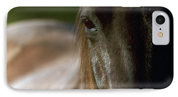 IPhone Case featuring the photograph My Neigh-bor's Horse by Doug Herr