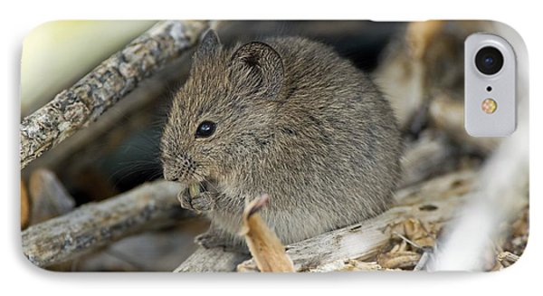 Namaqua Rock Mouse Phone Case by Peter Chadwick