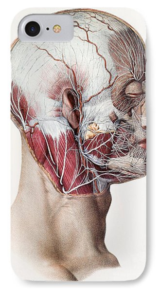 Neck And Facial Nerves Phone Case by Mehau Kulyk