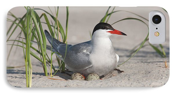 Nesting Common Tern Phone Case by Clarence Holmes