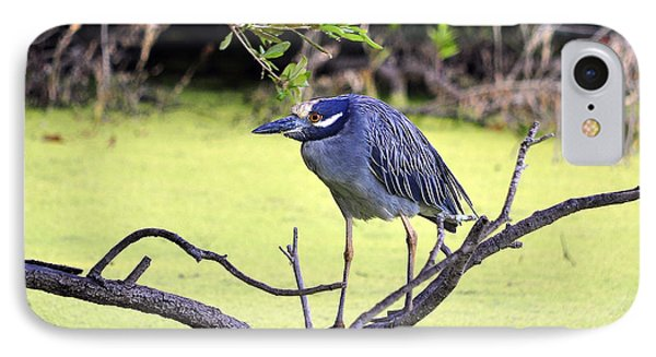 Night-heron IPhone Case by Al Powell Photography USA