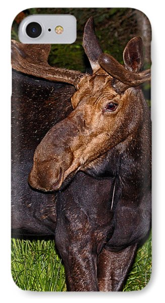 Night Moose 1 Phone Case by Lloyd Alexander