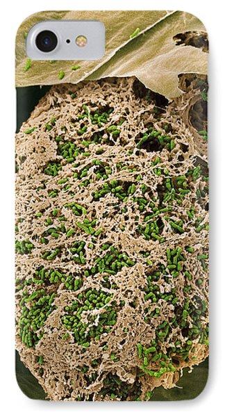 Nitrogen-fixing Bacteria, Sem Phone Case by Steve Gschmeissner