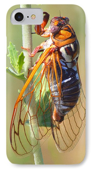 Noisy Cicada IPhone Case by Shane Bechler