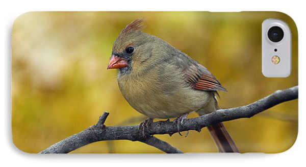 Northern Cardinal Female - D007849-1 Phone Case by Daniel Dempster