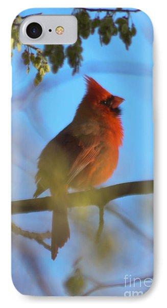 Northern Cardinal IPhone Case