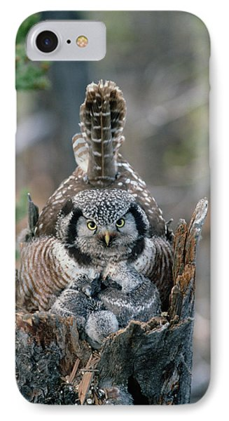 Northern Hawk Owl Surnia Ulula Parent IPhone Case by Michael Quinton