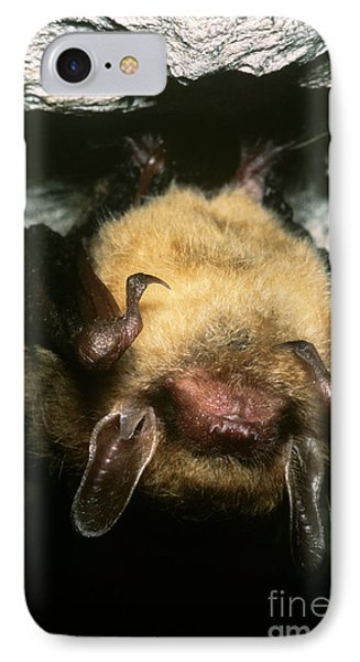 Northern Long-eared Bat Phone Case by Dante Fenolio
