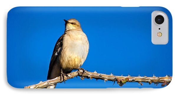 Northern Mockingbird IPhone Case by Robert Bales