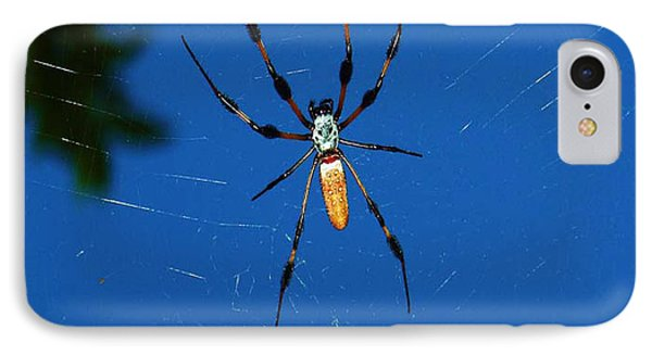IPhone Case featuring the photograph Not-so Itsy-bitsy Spider by Joy Braverman