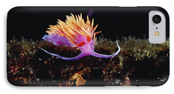 Nudibranch Brightly Colored Arctic Ocean Phone Case by Flip Nicklin