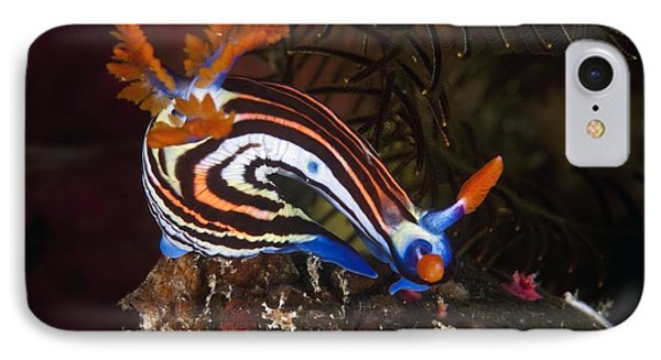 Nudibranch Phone Case by Matthew Oldfield