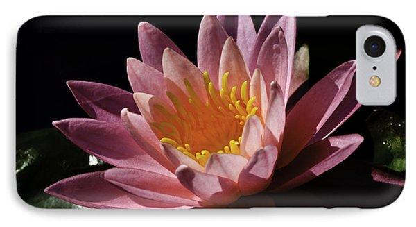 Nymphaea 'sunny Pink' IPhone Case by Perla Copernik