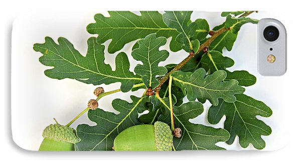 Oak Branch With Acorns IPhone Case