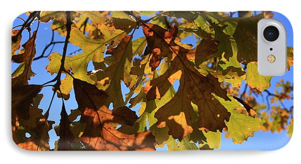 Oak Leaves With Backlighting Phone Case by Lyle Hatch