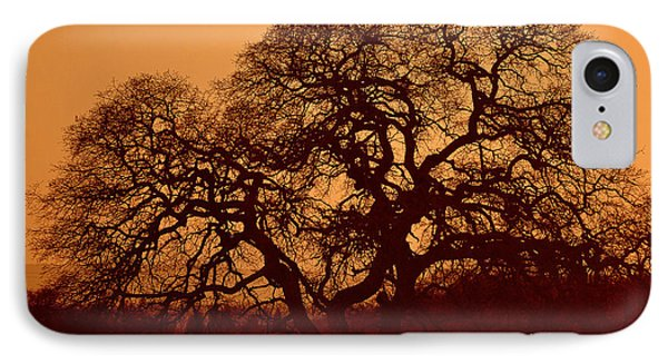 IPhone Case featuring the photograph Oak Tree At Sunset by Rima Biswas