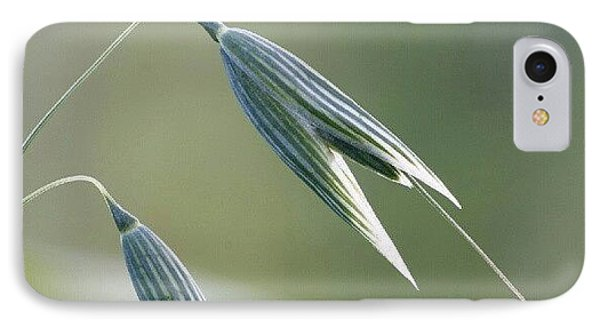 #oat #spica #decorative #cereal #plant IPhone Case by Andrei Vukolov