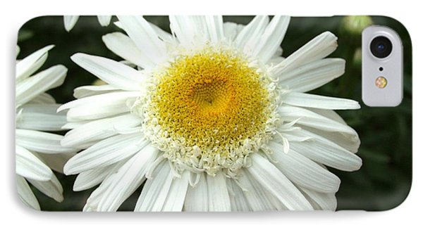 IPhone Case featuring the photograph Oh Daisy by Carol Sweetwood