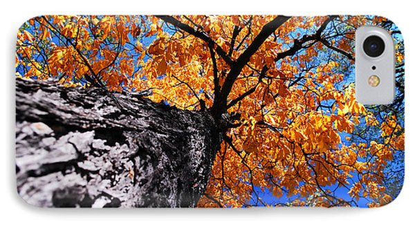 Old Elm Tree In The Fall Phone Case by Elena Elisseeva