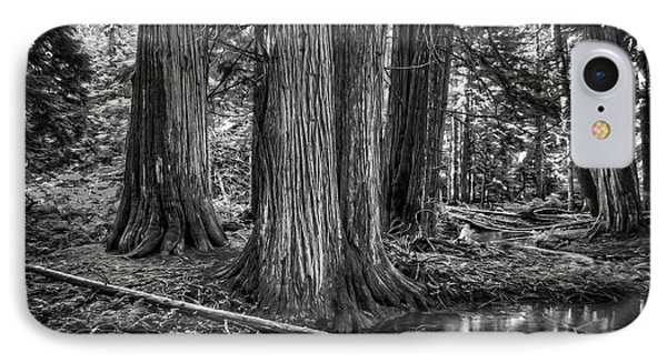 Old Growth Cedar Trees - Montana Phone Case by Daniel Hagerman