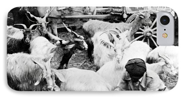Old Palermo Sicily - Goats Being Milked At A Market Phone Case by International  Images
