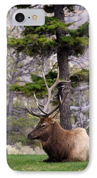 On The Grass IPhone Case by Steve McKinzie