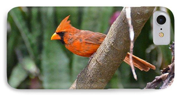 Orange Cardinal Phone Case by Carol  Bradley