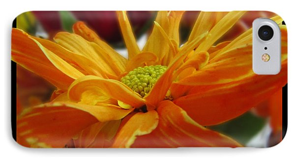 IPhone Case featuring the photograph Orange Juice Daisy by Debbie Portwood