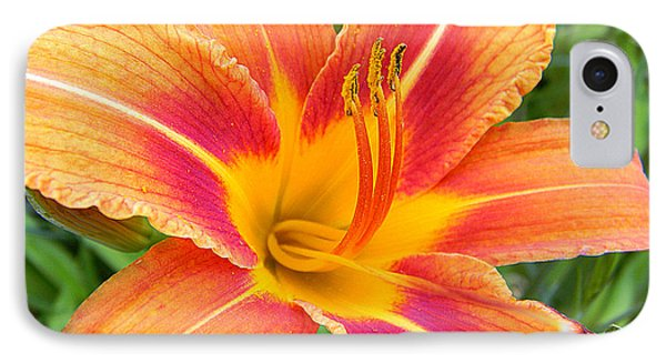 Orange Lily IPhone Case by Mark J Seefeldt