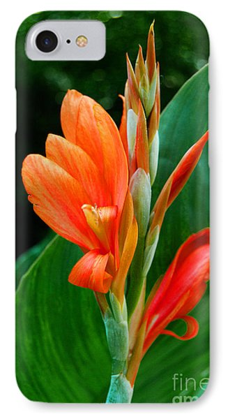 Orange IPhone Case by Linda Mesibov
