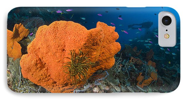 Orange Sponge With Crinoid Attached Phone Case by Steve Jones