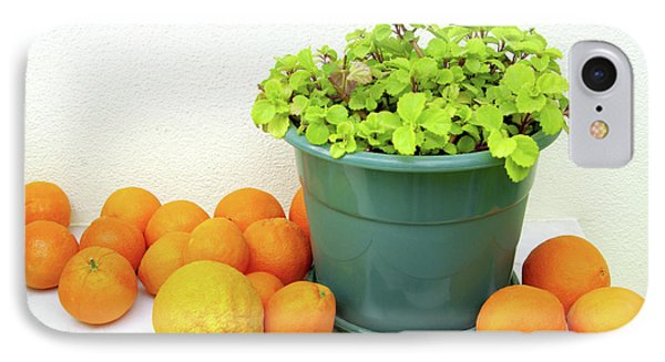 Oranges And Vase IPhone Case by Carlos Caetano