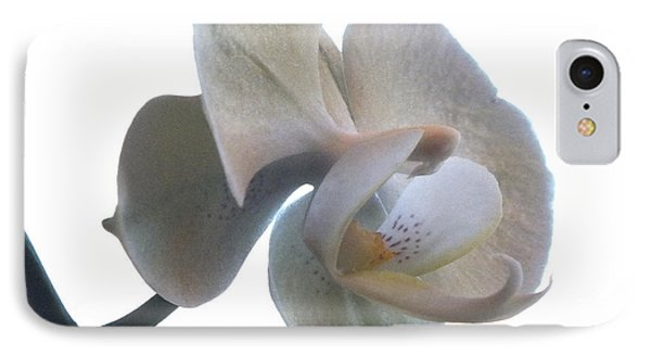 Orchids 1 IPhone Case by Mike McGlothlen