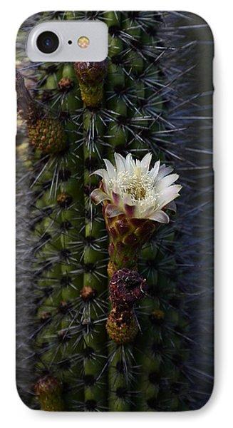 Organ Pipe Cactus  Phone Case by Saija  Lehtonen