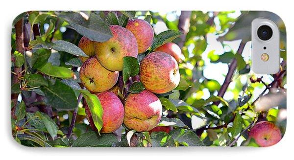 Organic Apples In A Tree Phone Case by Susan Leggett