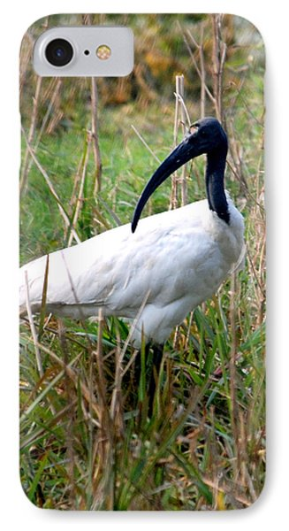 IPhone Case featuring the photograph Oriental White Ibis by Pravine Chester