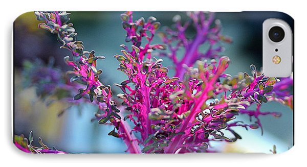 Ornamental Cabbage IPhone Case by Judi Bagwell