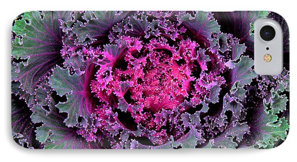 Ornamental Cabbage Phone Case by Michael Friedman