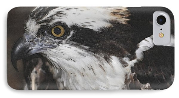 IPhone Case featuring the photograph Osprey by Lydia Holly