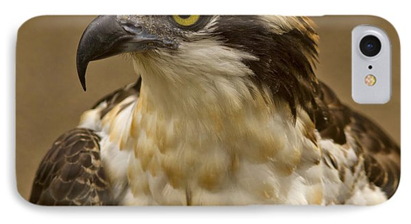 IPhone Case featuring the photograph Osprey Portrait by Anne Rodkin