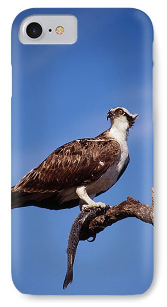 IPhone Case featuring the photograph Osprey With Fish by Bradford Martin