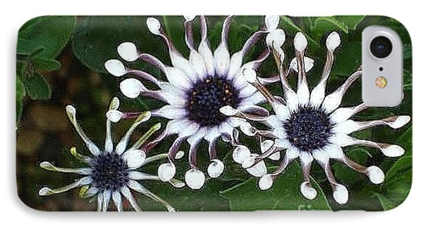 IPhone Case featuring the photograph Osteospermum by Katy Mei