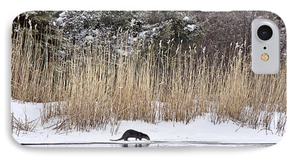Otter In Winter IPhone Case