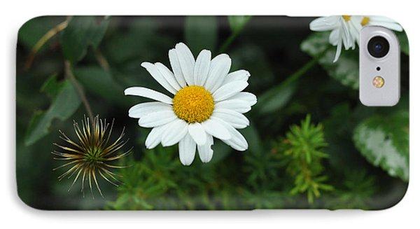 Oxeye Daisy Daniel Boone Inn - C9965b IPhone Case by Paul Lyndon Phillips
