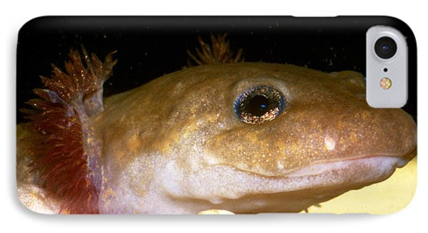 Pacific Giant Salamander Larva IPhone 7 Case by Dante Fenolio