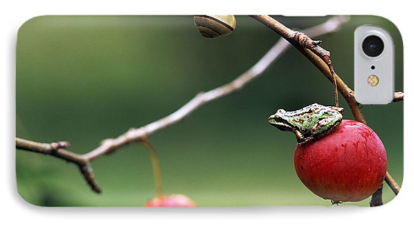 Pacific Tree Frog On A Crab Apple IPhone Case by David Nunuk